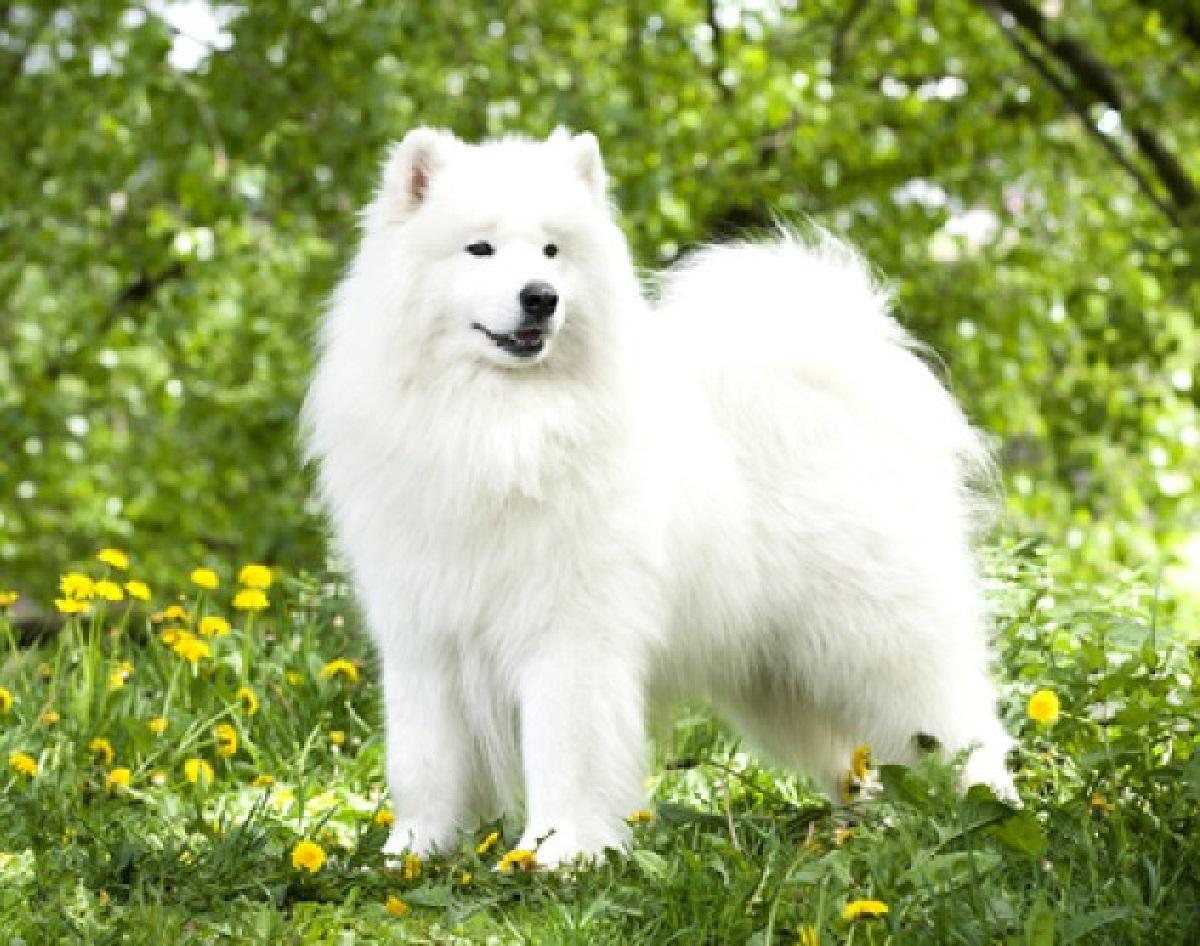 Ecco degli atteggiamenti che il cane odierà sempre degli esseri umani e non dobbiamo ripetere
