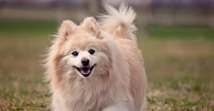 ecco atteggiamenti cane odia sempreesseri umani