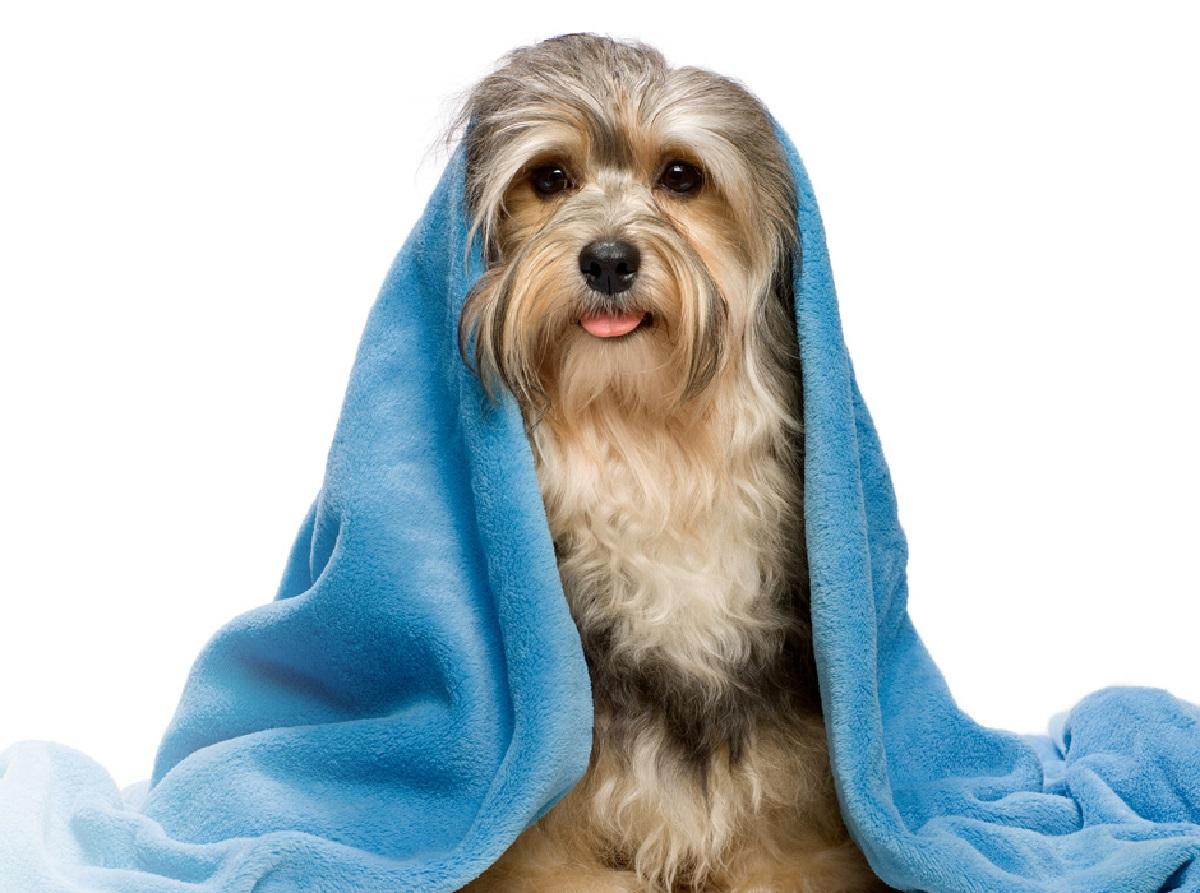Ecco i trucchi per far profumare sempre il tuo cane senza che si faccia male