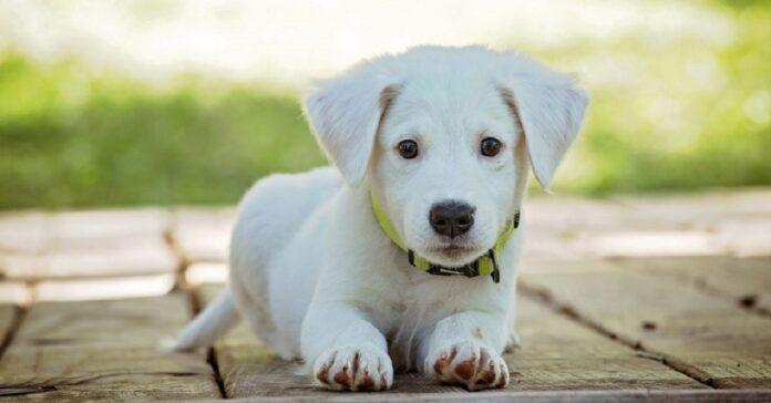 cane sguardo attenzione