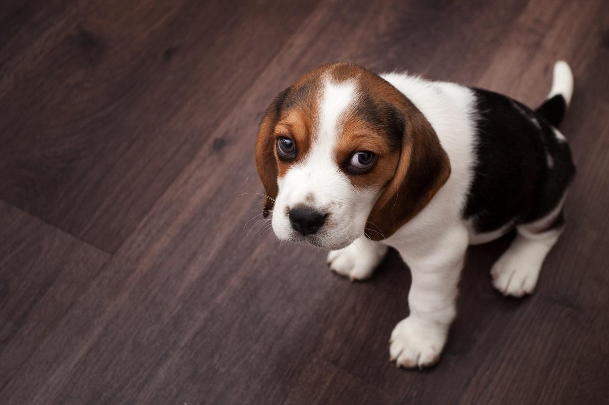 Ecco perché dovresti guardare il tuo cane più spesso di quanto tu non faccia