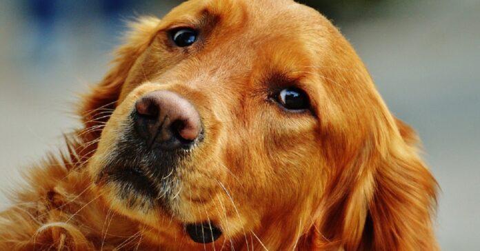 cucciolo cane naso