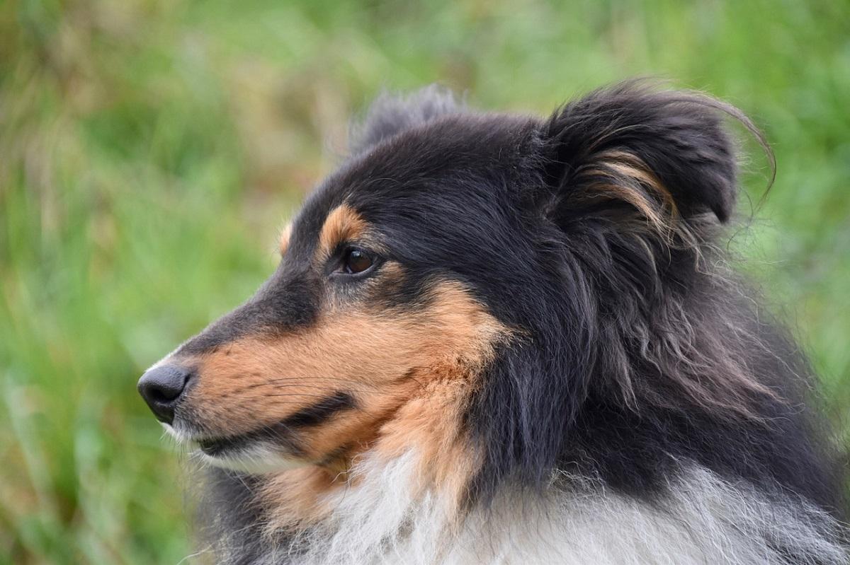 Ecco perché il naso del tuo cane può essere utilissimo per salvarti la vita