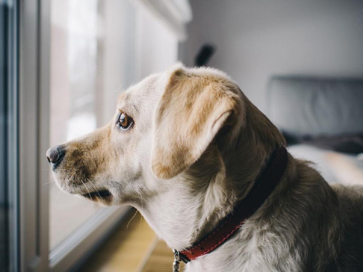 Ecco perché non dovresti far capire al cane che sei felice di vederlo quando rientra a casa