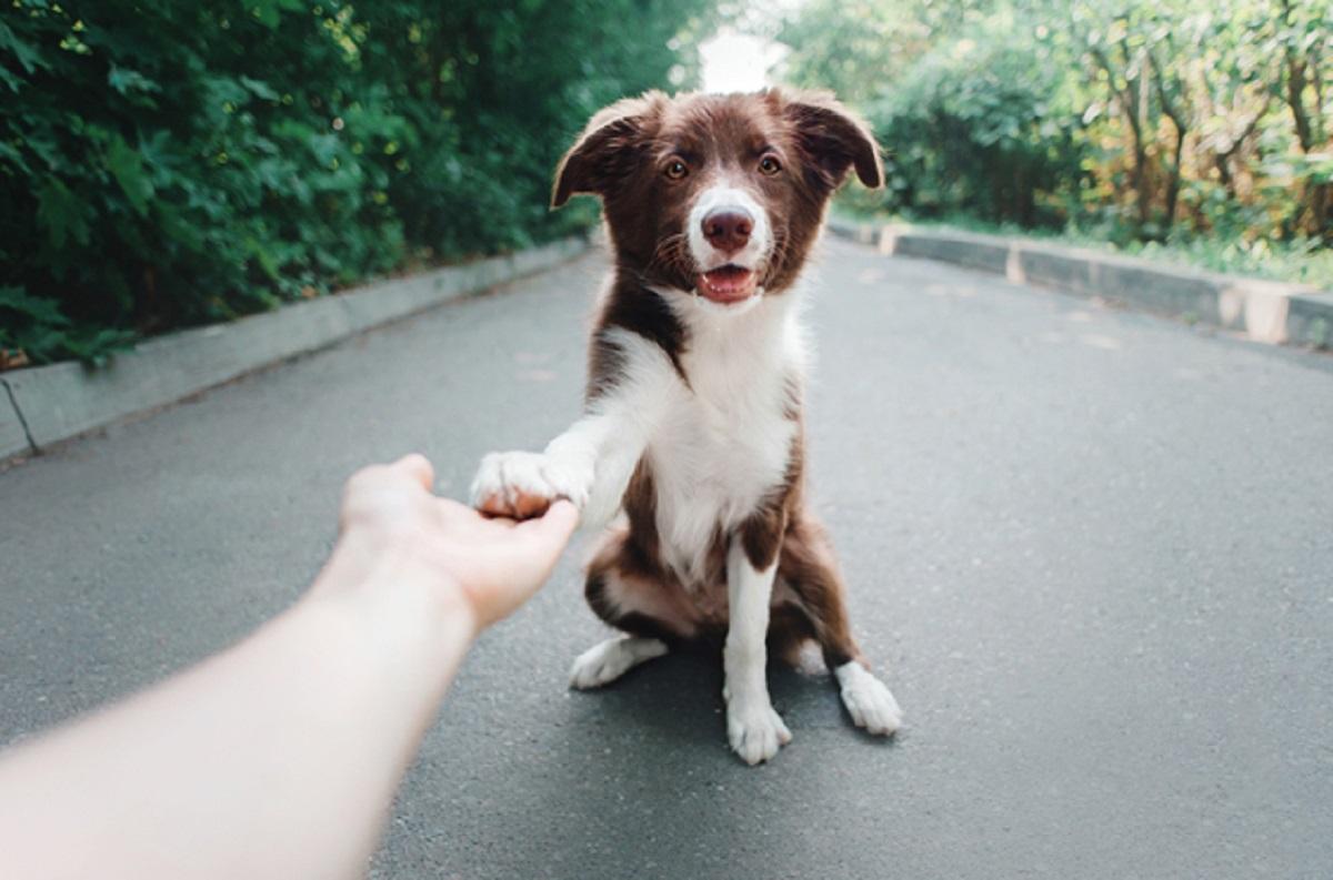 Ecco perché quando i cani fanno questi gesti non riusciamo proprio a resistergli