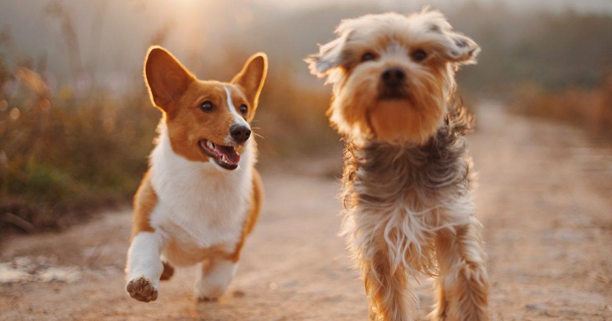 Ecco perchè se il tuo cane si comporta così significa che non è più un cucciolo