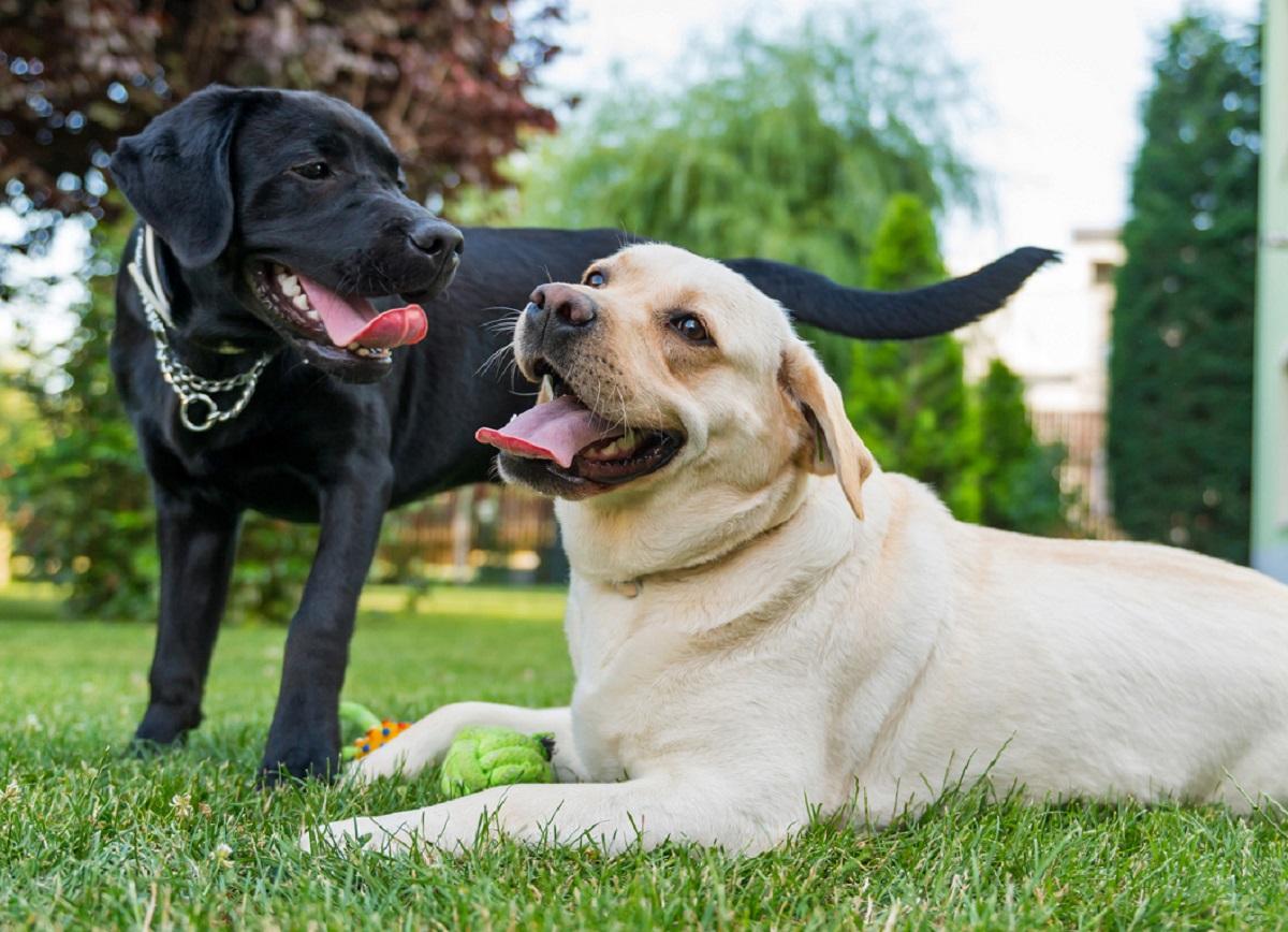 Ecco svelato perché il tuo cane fa questo gesto con altri cani maschi