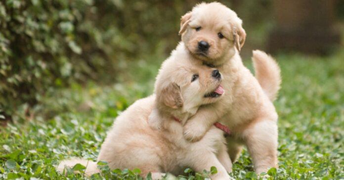 ecco svelato perché cane fa questo gesto con altri cani