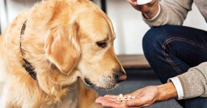 dare le medicine al cane