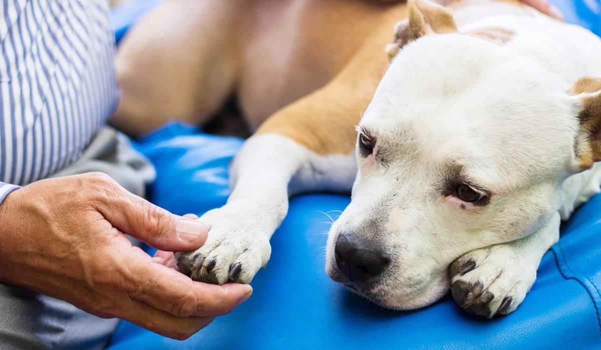 Enrox Flavour per cani: cos'è e a cosa serve questo farmaco per Fido