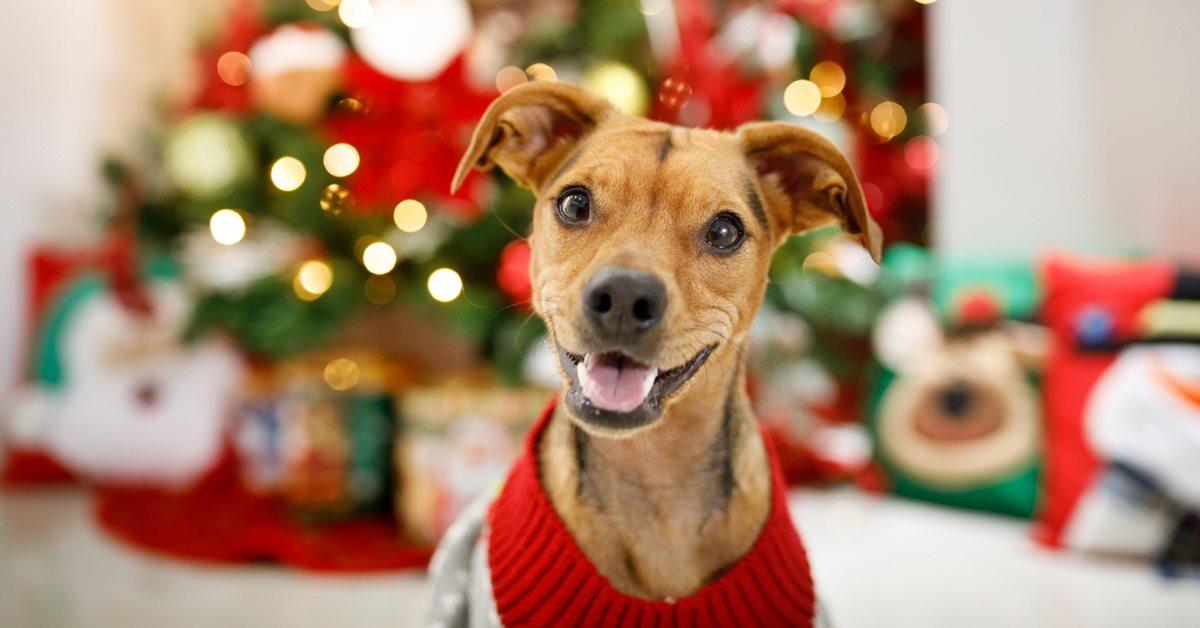 cane con il maglione natalizio