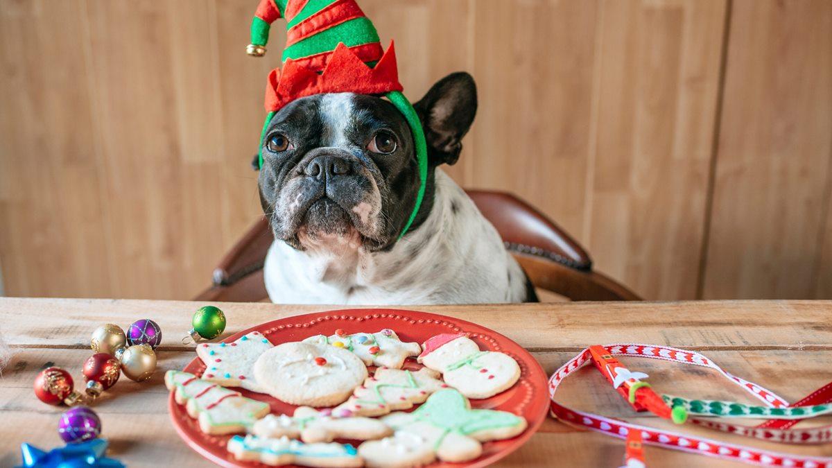 biscotti natalizi per cani