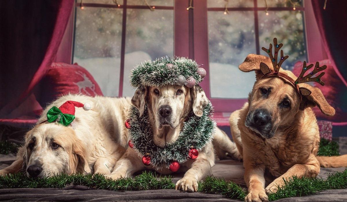 cani decorati per natale