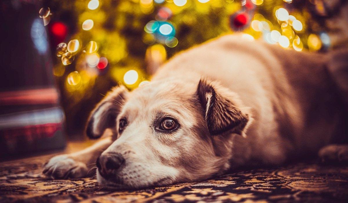 cane dorme ai piedi dell'albero decorato
