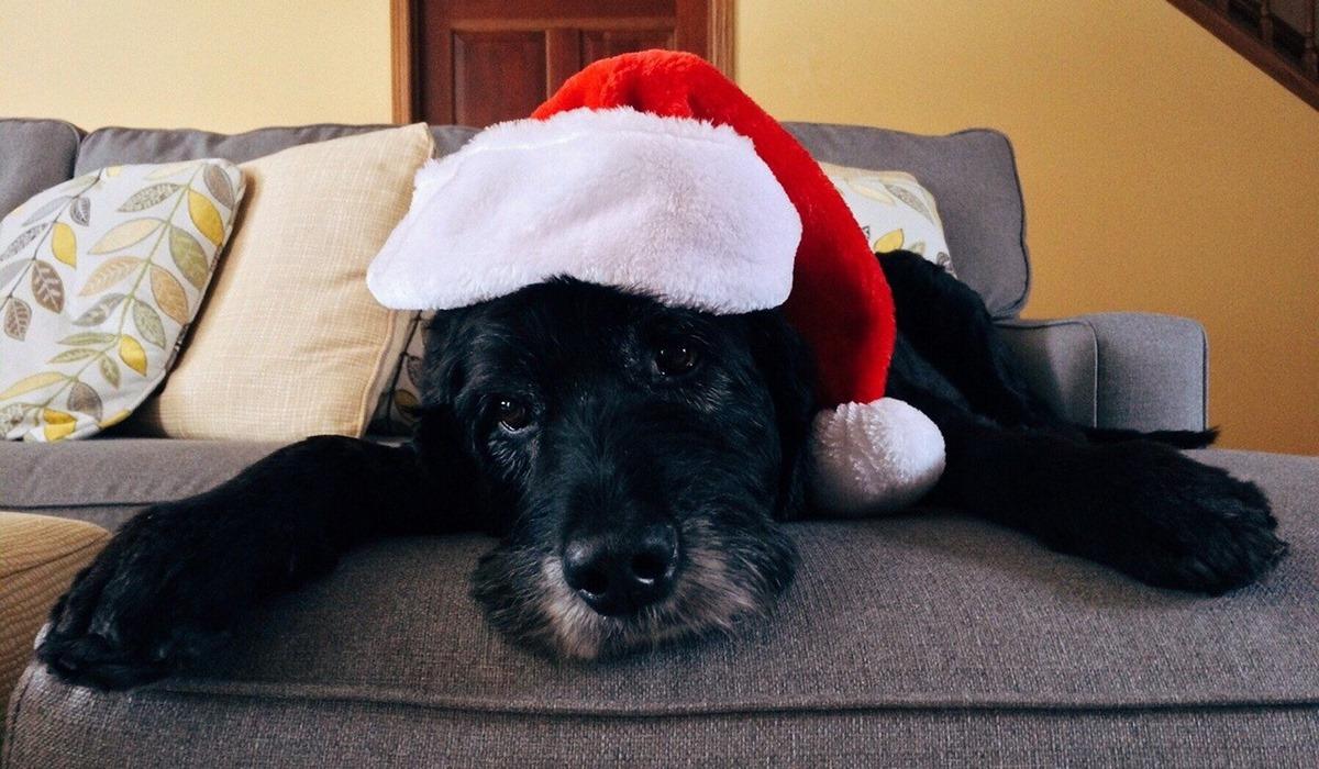 cane nero con il cappello di babbo natale