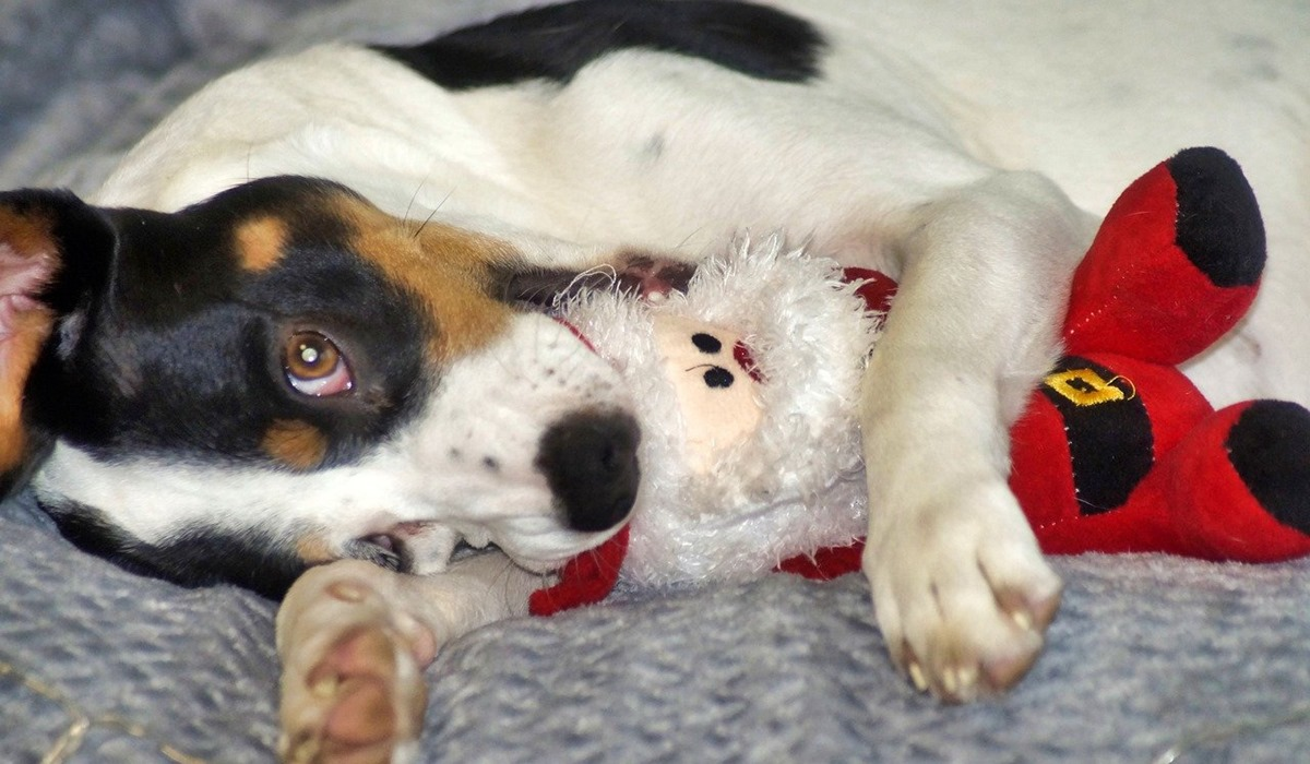 cucciolo gioca con un pupazzo natalizio