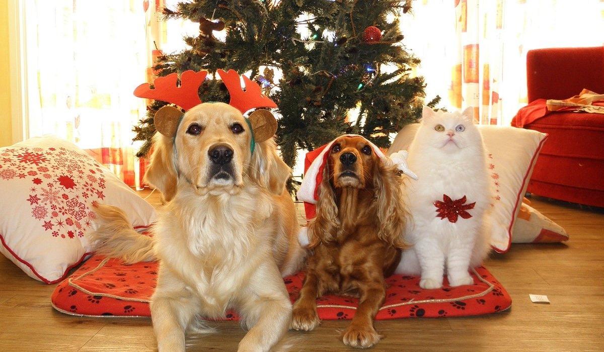 cani e gatto in posa per la foto natalizia