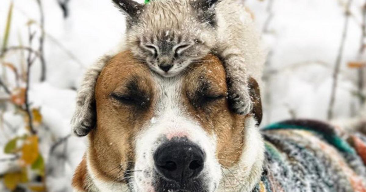 Henry e Baloo: un cucciolo di cane e un gattino amici per la pelle che viaggiano insieme (VIDEO)