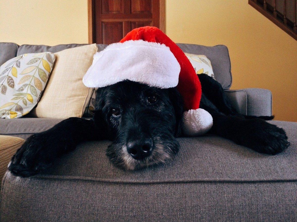 Il cane si è spaventato a Natale? Le possibili cause e come calmarlo