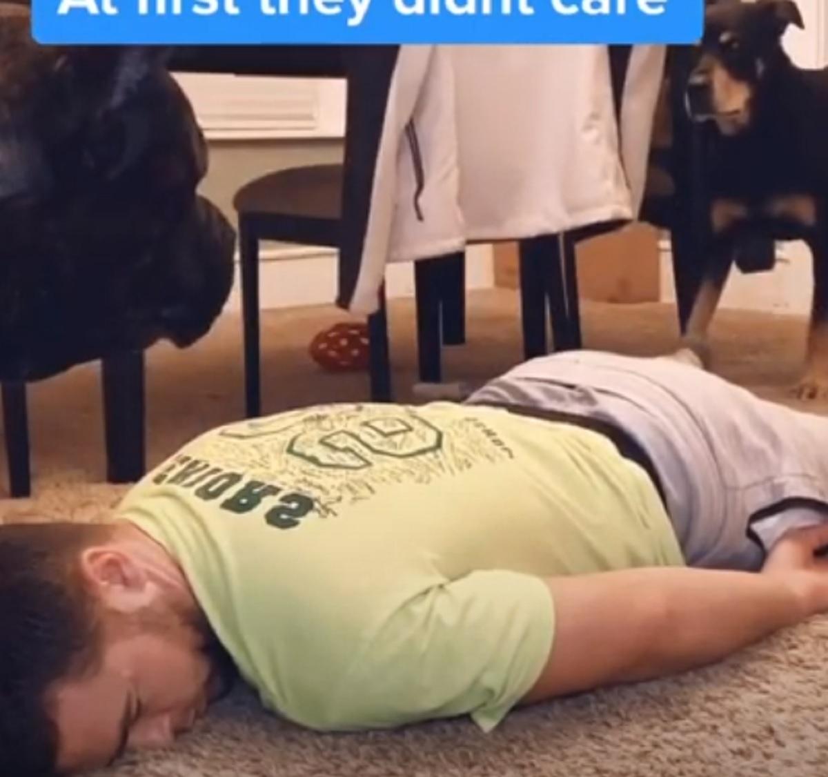 Il cucciolo di cane corso vede il padrone accasciarsi a terra e reagisce in modo inaspettato (VIDEO)