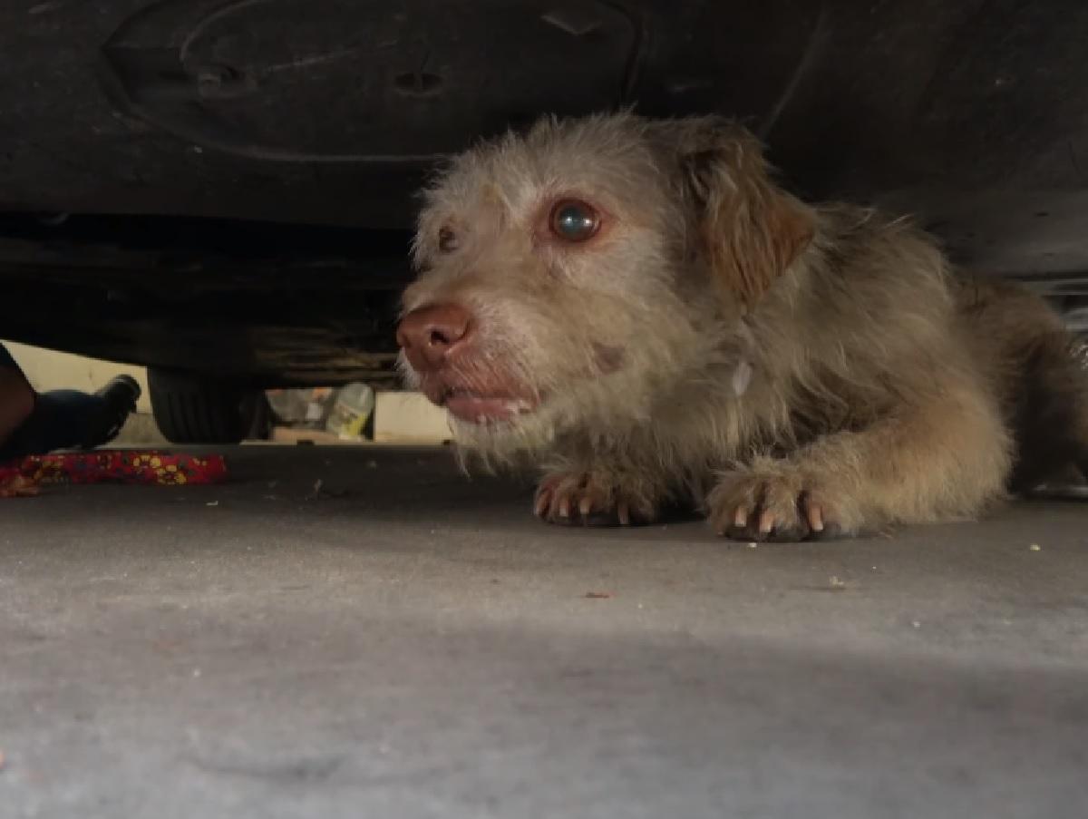 Il cucciolo di cane ha bisogno di aiuto, il suo salvataggio in video tiene col fiato sospeso