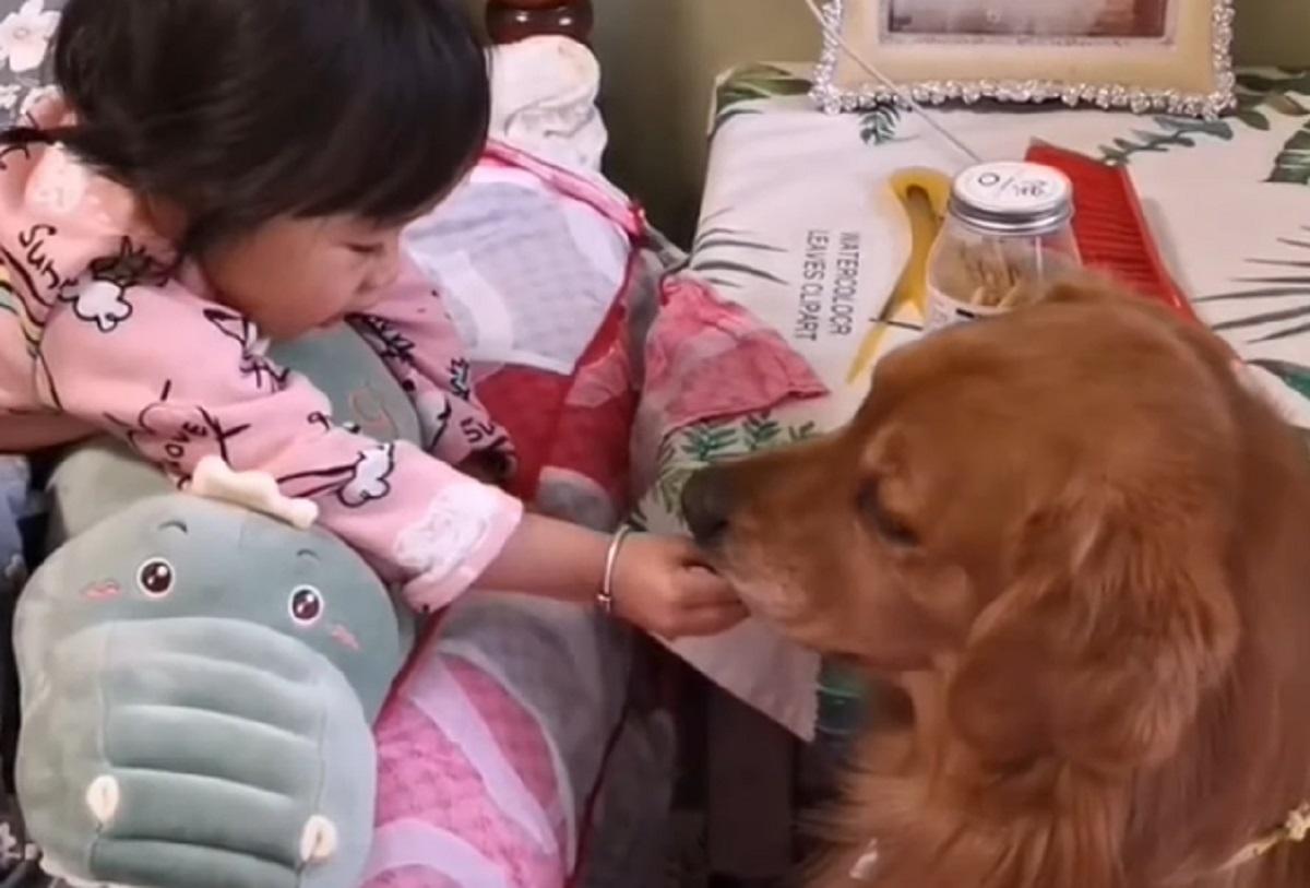 cagnolino sorella affetto