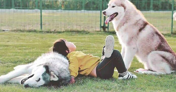 cucciolo husky cieco non scende gradino aiuto fratellone video