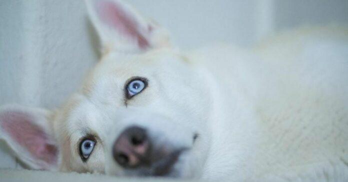 cane albino foto