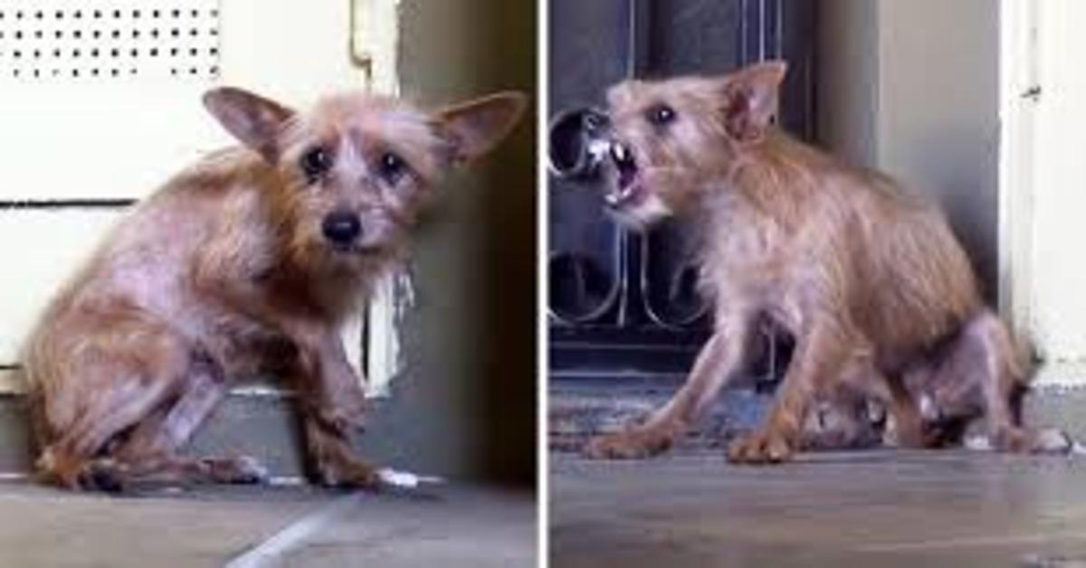 Holly, una cucciola di cane randagia viene accarezzata per la prima volta  e commuove il web (VIDEO)
