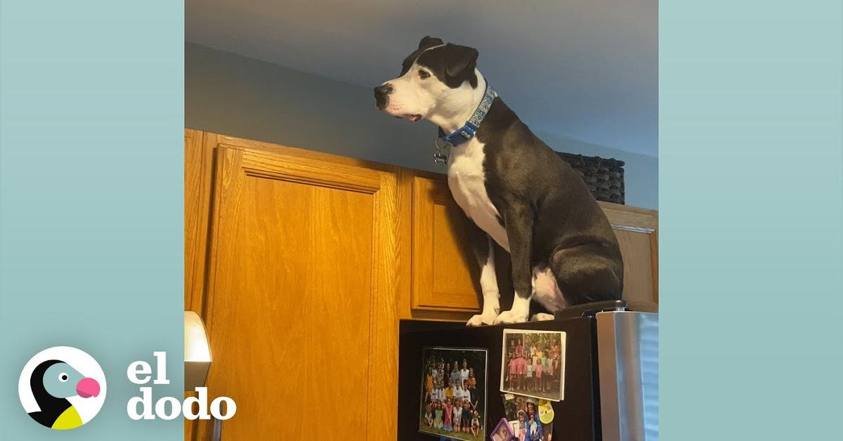 Il cucciolo di cane Mako, cresciuto con dei gatti tanto che che si crede uno di loro (VIDEO)