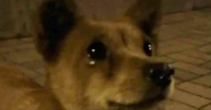 cane occhi con lacrime