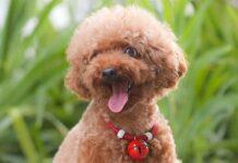 cane con il campanellino