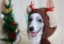 cuccioli di cane e albero di natale
