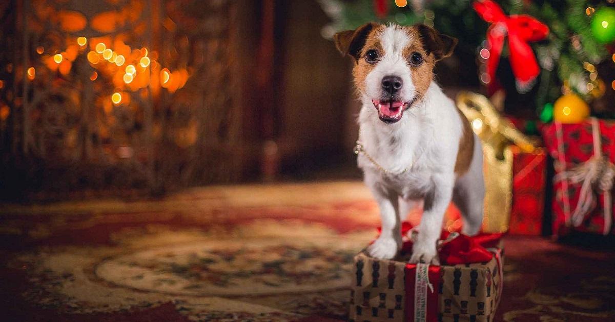 cane su regalo di natale