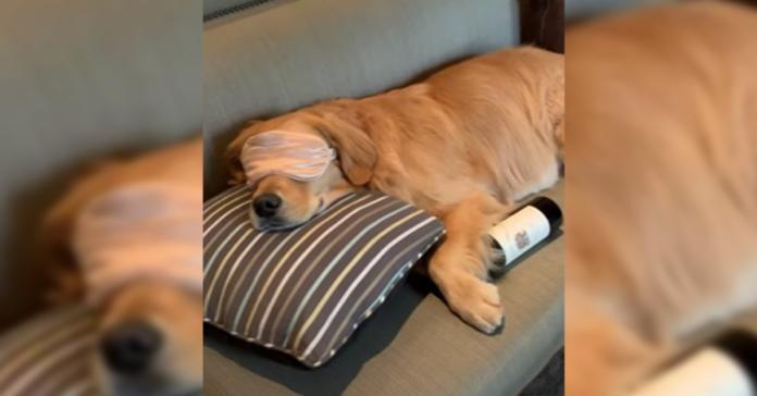 cane dorme con mascherina pantofole e bottiglia