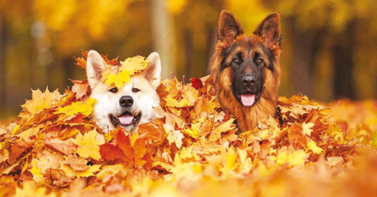 Svelato il motivo per cui il nostro cane impazzisce quando vede delle foglie per terra