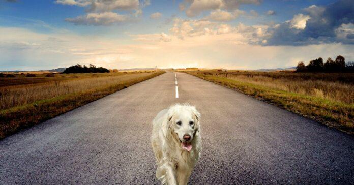 quanto vive davvero un cane randagio