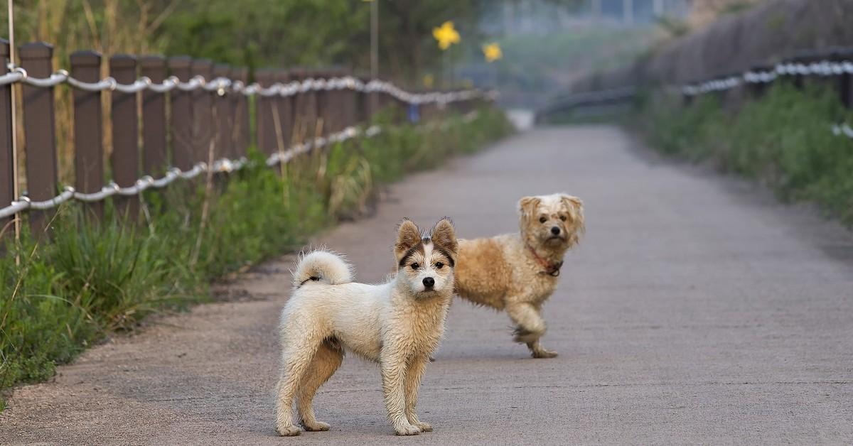 Svelato quanto vive davvero un cane randagio e perché dovresti adottare