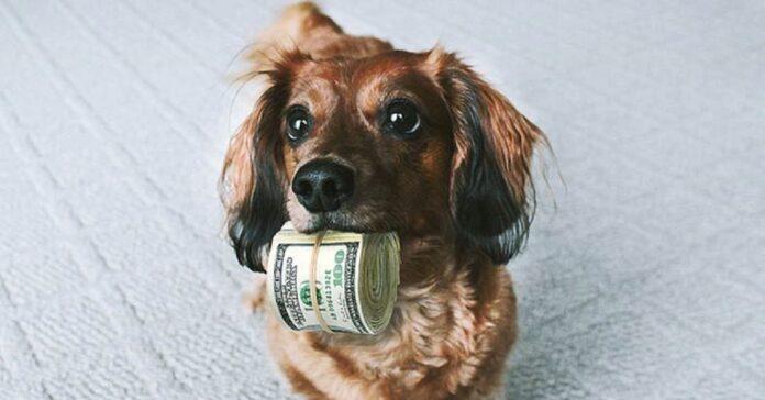 questo cucciolo cane difenderà banconota a tutti i costi