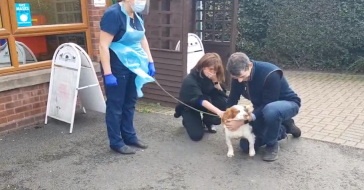 L'emozionante rincontro fra Bonnie, una cucciola di Cocker Spaniel, e i suoi padroni dopo sei anni(VIDEO)
