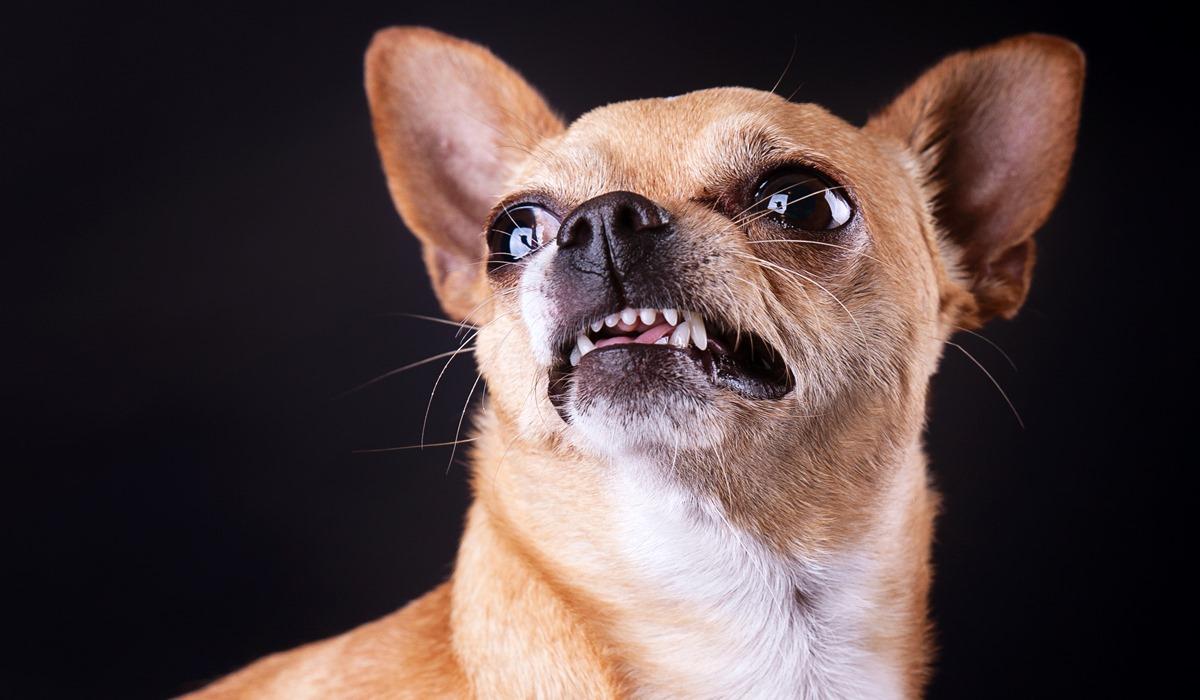 Riflessi incondizionati del cane, quali sono e perché bisogna conoscerli