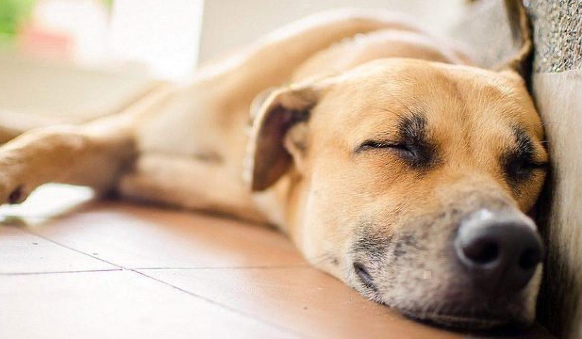 Rilexine Appetibile per cani: cosa sapere su questo farmaco antibiotico