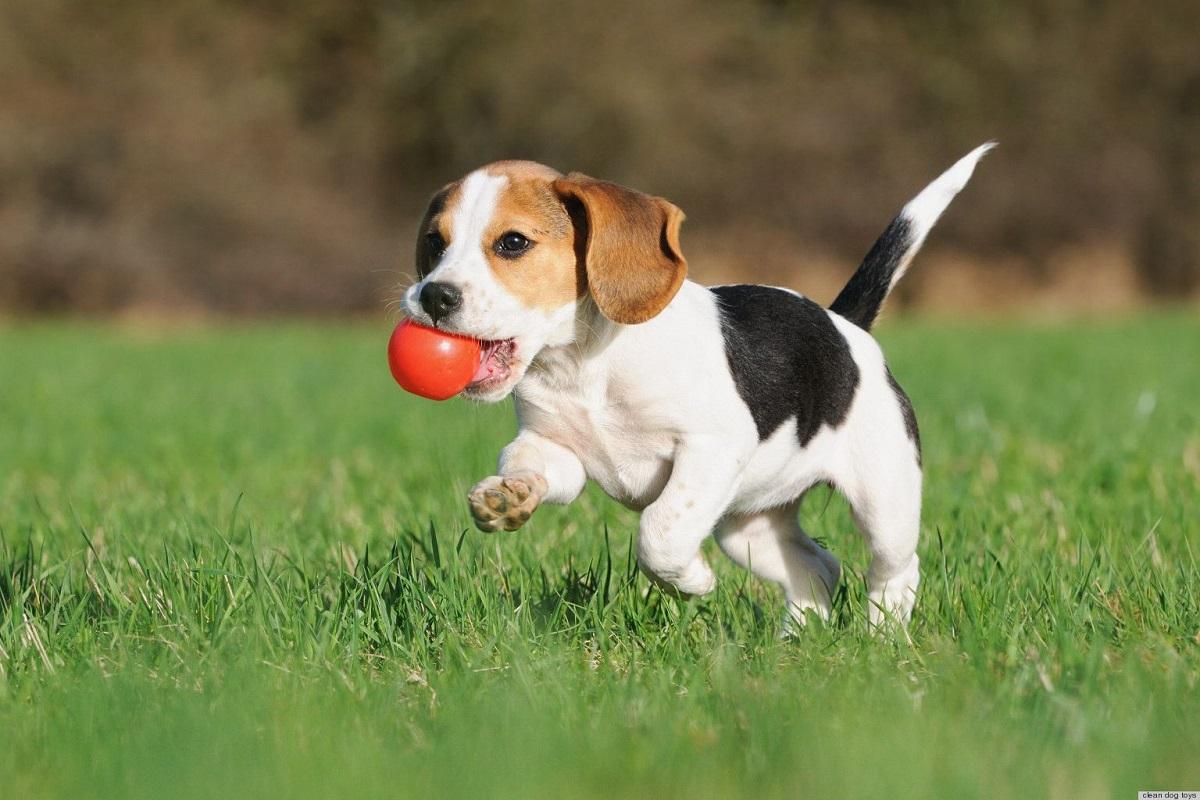 Santo Stefano con il cucciolo di cane: che cosa si può fare con i nostri cagnolini?