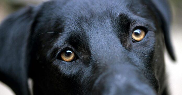 svelato cosa ci vuole dire cane quando specifica mossa