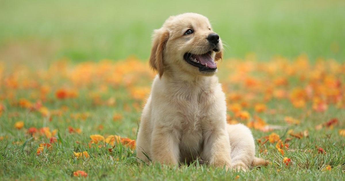 Svelato il motivo per cui non devi mai e poi mai fissare il tuo cane dritto negli occhi