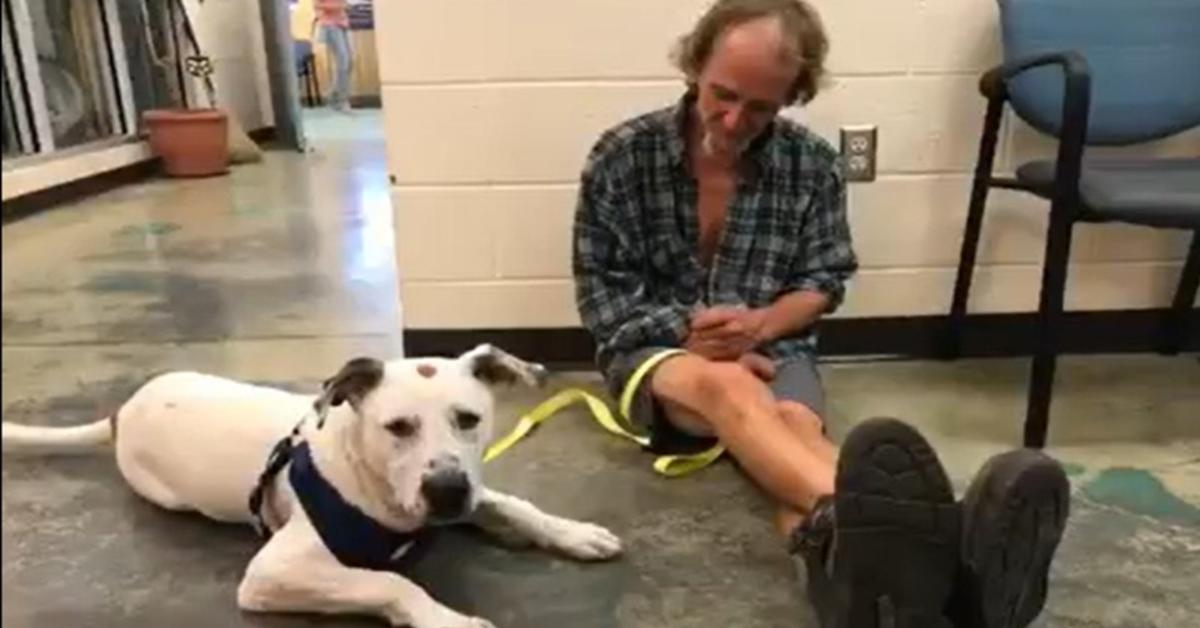 Il commovente rincontro fra un cucciolo di cane e il senzatetto suo padrone (VIDEO)