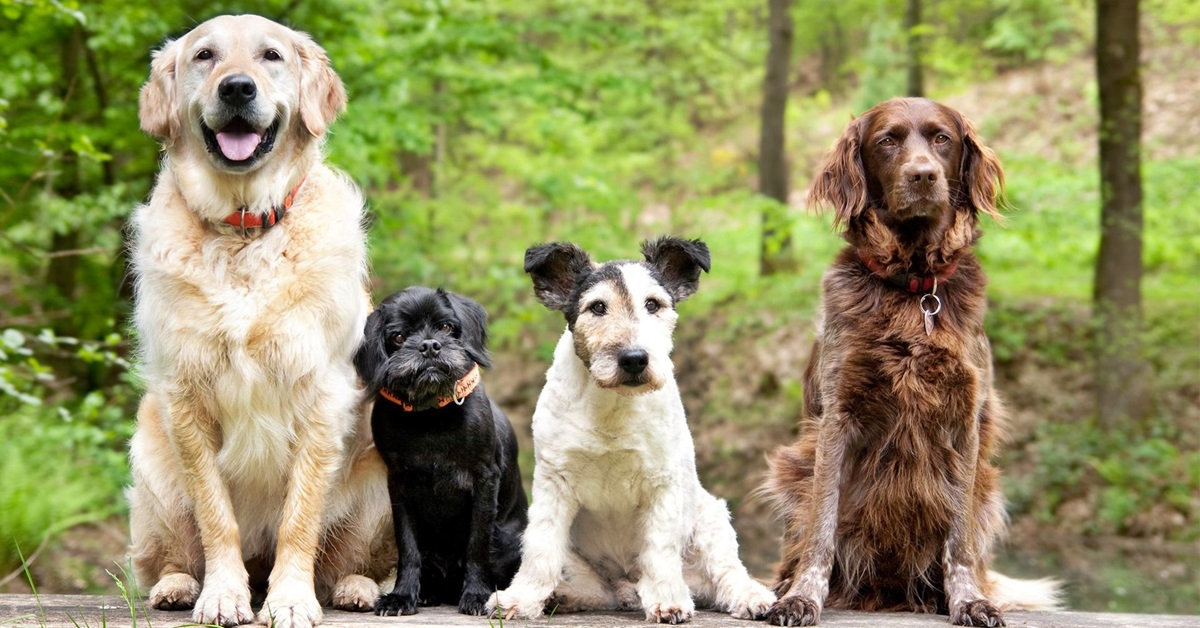 razze canine tutte diverse