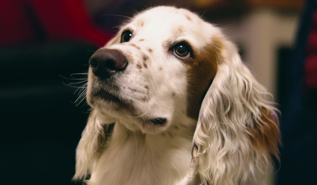 Tratti comportamentali del cane: tutti i caratteri che potrebbe avere Fido