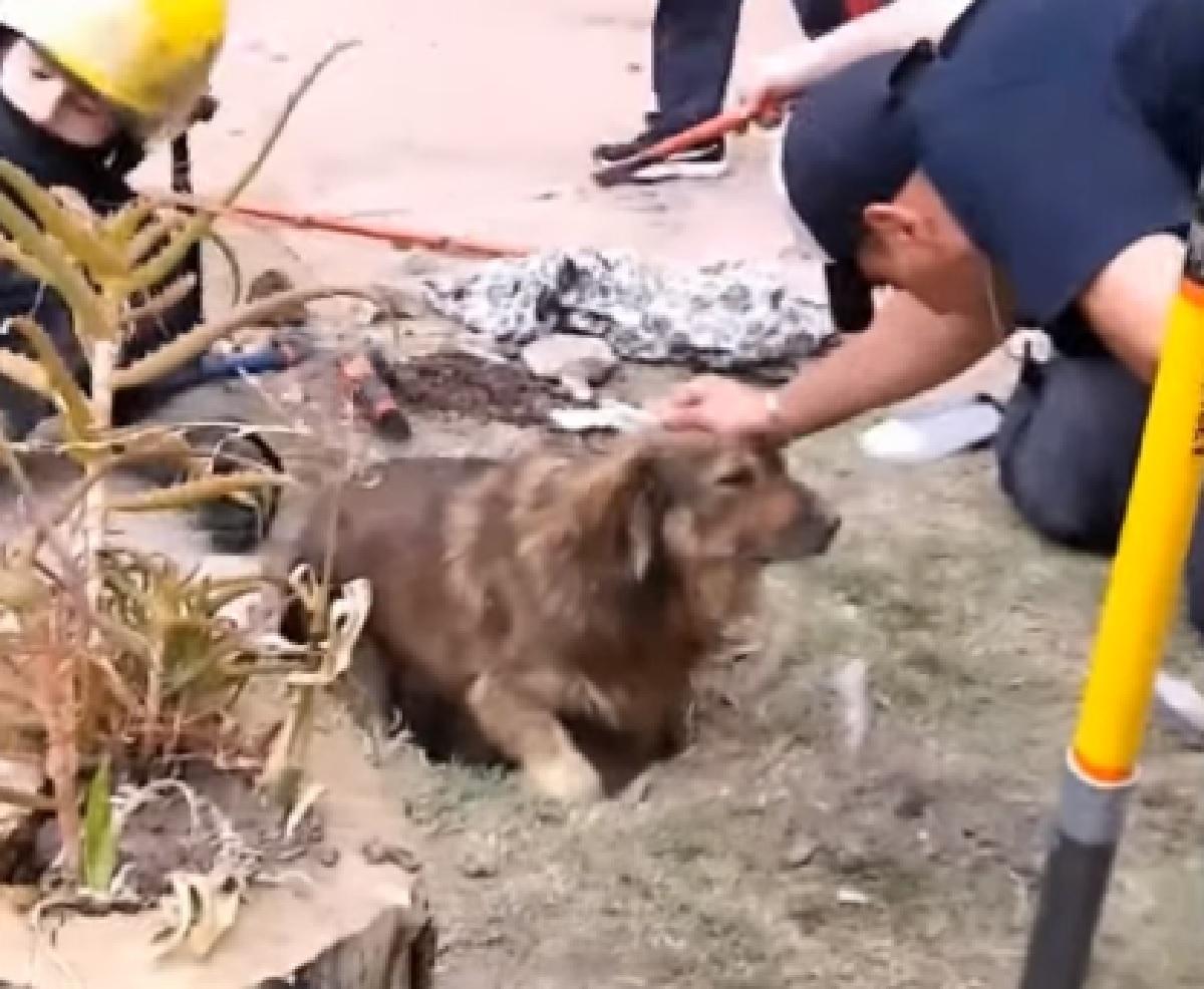 Trovano il cucciolo di cane in estrema difficoltà, nel video è chiaro lo stupore dei soccorritori