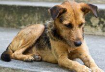 trovano cucciolo di cane difficoltà stupore presenti